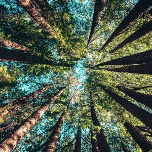 minä olen puu